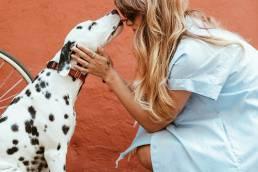 pexels daria shevtsova 1389994 scaled uai Comment dresser votre chien à la cage en six étapes faciles