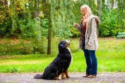 big dog training min uai Comment les chiens apprennent-ils les mots ?