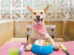 dog eating uai Comment dresser votre chien à sonner une cloche pour aller dehors et faire ses besoins ?