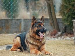 maitre chien uai choisir un bon dresseur de chien