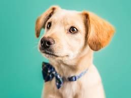 nom chiot 6d24a44af72d79896fcaf95494afbff4 uai Différence entre comportement et éducation canine