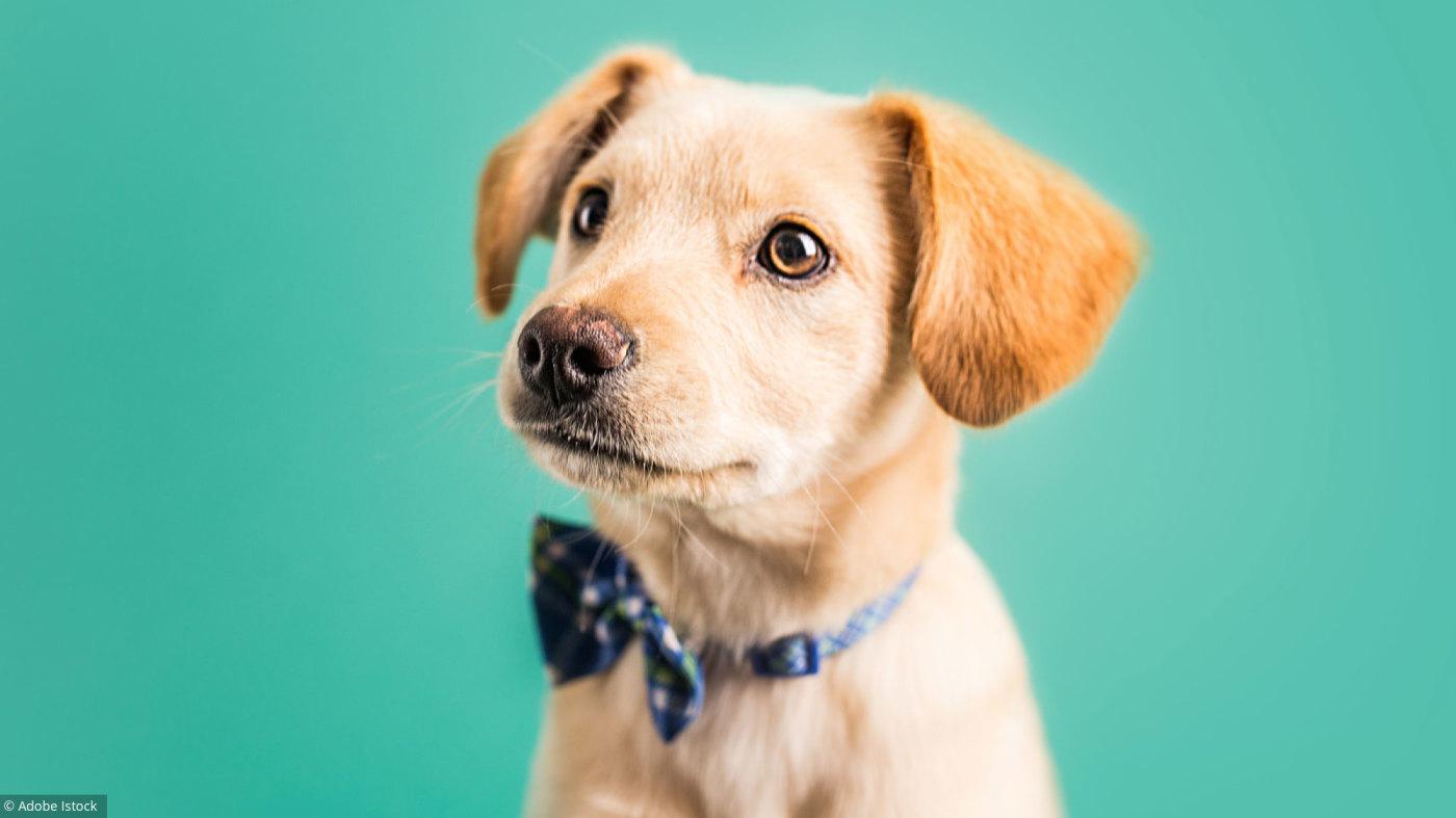 nom chiot 6d24a44af72d79896fcaf95494afbff4 dressage de votre chien