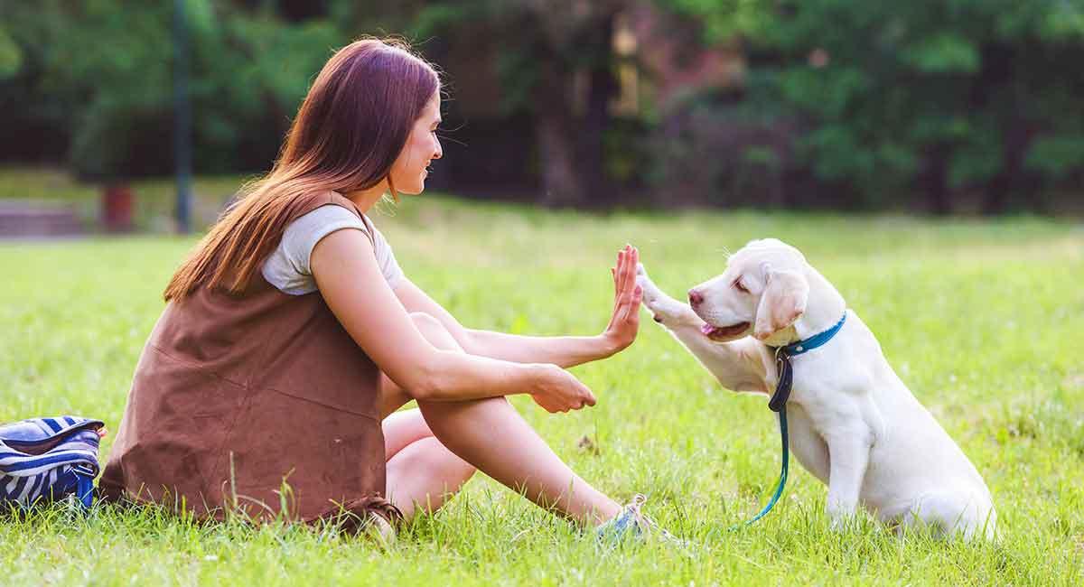 Comment les chiens apprennent-ils les mots ?