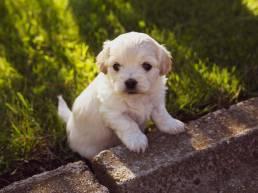 dressage chiot uai Comment empêcher votre chien de s'échapper du jardin ?
