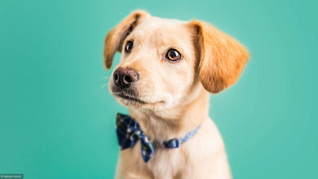 nom chiot 6d24a44af72d79896fcaf95494afbff4 Quand les chiots peuvent-ils rencontrer d'autres chiens ?