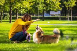 renforcement positif chien uai apprendre à un chien à aller chercher