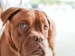 pexels gratisography 2007 scaled uai Comment intégrer un nouveau chien dans votre foyer