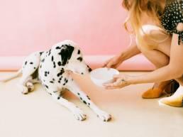 pexels daria shevtsova 2053922 scaled e1620759301376 uai Pourquoi certains ingrédients de la nourriture pour chiens devraient-ils être évités ?