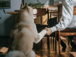 pexels zen chung 5749112 scaled uai Comment les chiens savent quand la communication leur est destinée