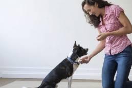eleveur de chiens cynodo scaled e1617910103144 uai Comment devenir éleveur de chiens ?