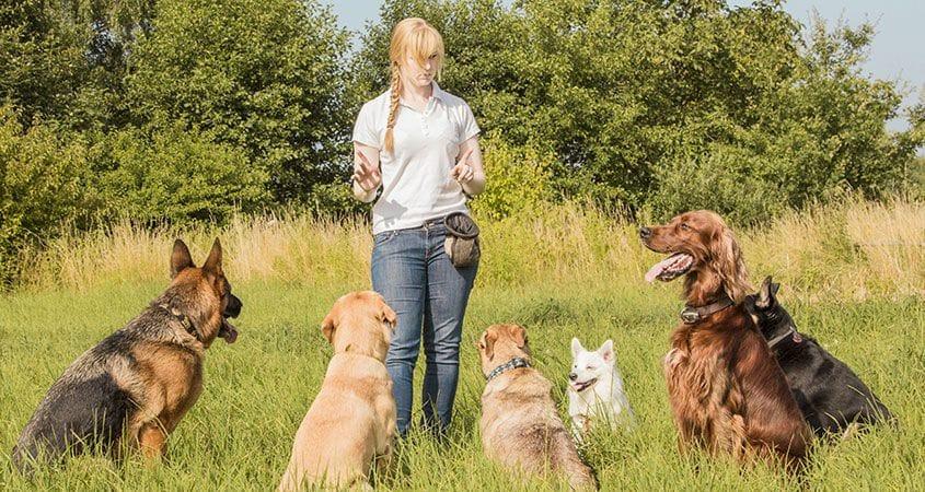 eleveur de chiens Comment devenir éleveur de chiens ?