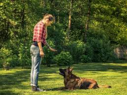 dresser votre chien uai Dressage de chiens pour les débutants