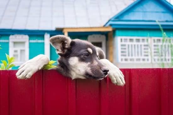 Comment empecher votre chien de sechapper du jardin Comment empêcher votre chien de s'échapper du jardin ?