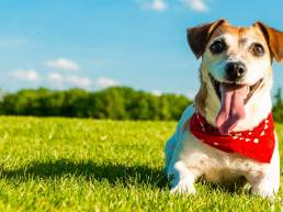 Pet happy and healthy scaled uai 7 façons dont les animaux domestiques