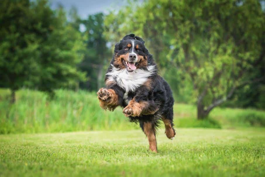 chien 3 façons de garder votre chien heureux et en bonne santé