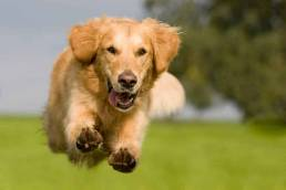 happy dog chien heureux uai 3 façons de garder votre chien heureux et en bonne santé