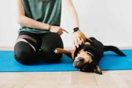 pexels karolina grabowska 4498185 uai nous comprenons vraiment à quel point il peut être difficile de laisser votre chien lorsque vous devez vous absenter. Nous serions ravis de vous aider et de répondre à toutes les questions que vous pourriez vous poser.