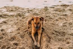 pexels laura stanley 2252311 scaled uai Pourquoi les chiens creusent